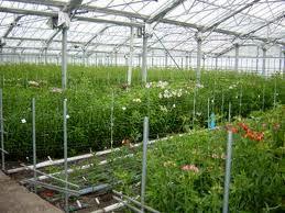 9 طرح آب و خاک و گلخانه شهرستان ارزوئیه در هفته جهاد کشاورزی به بهره برداری رسید