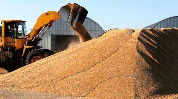 خریدتضمینی گندم در چهارمحال و بختیاری از مرز ۳۰ هزار تن گذشت