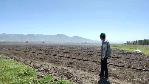 افزایش 7 برابری کاشت چغندر قند در شیراز