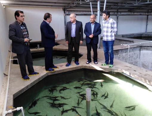 محدودیت منابع خاویار وحشی موجب جایگزینی صنعت پرورش ماهیان خاویاری شد