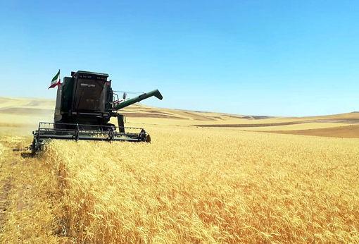 برداشت 85 هزار تن گندم از 93300 هکتار از مزارع هشترود