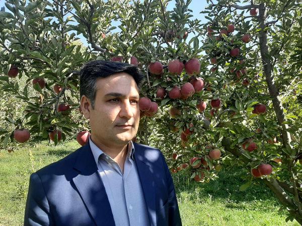 برگزاری جشنواره سیب مراغه در 19 مهرماه