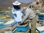 67 تن عسل درسیستان وبلوچستان برداشت شد