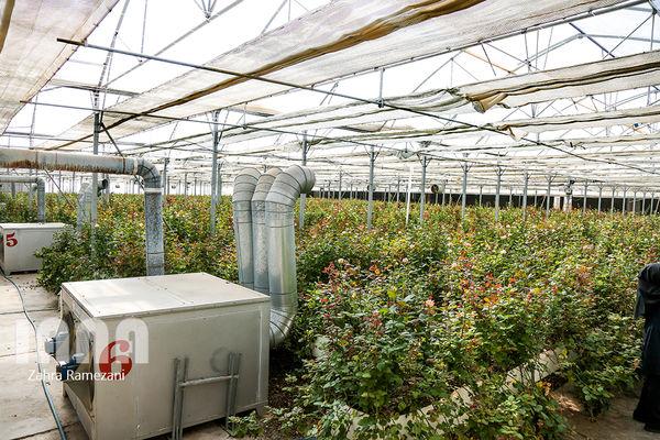 واگذاری شهرک گلخانهای به فارغ التحصیلان کشاورزی