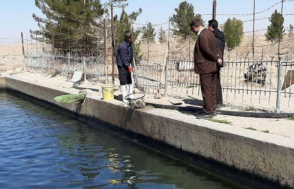 مقابله با کرونا با صید ماهی از استخرهای شهرستان بشرویه