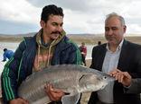 پتانسیل تولید انواع ماهیان پرورشی به ظرفیت 6 هزار تن در سال در حاشیه رودخانه ارس