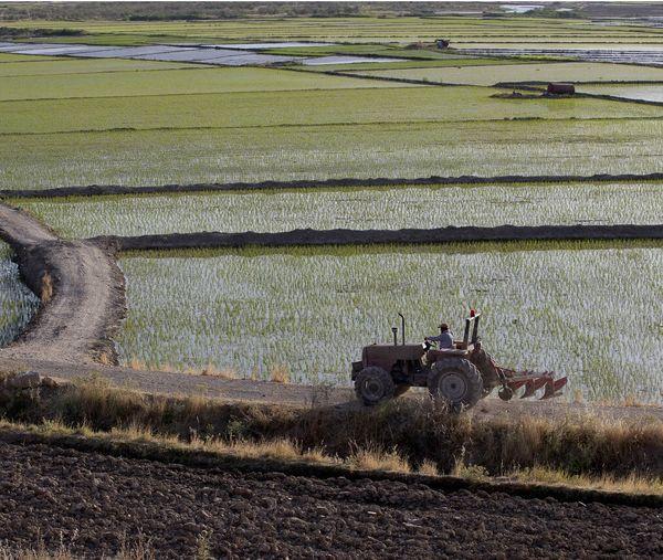 تجهیز و نوسازی ۸۶ هزار هکتار از اراضی شالیزاری گیلان
