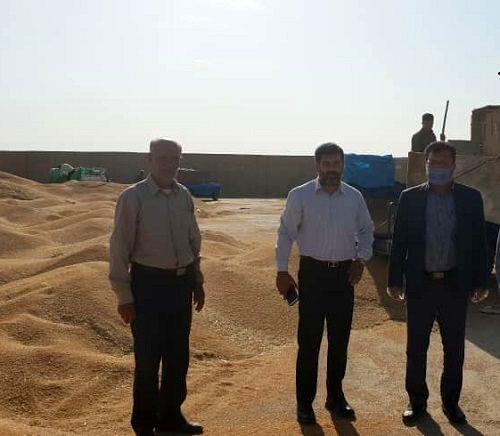 تحویل57 هزارتن گندم به مراکز خرید خرامه