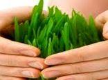 تحقق بیمه محصولات کشاورزی نیازمند اعتمادسازی