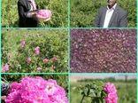 نخستین کارخانه فرآوری گل محمدی لرستان امسال بهرهبرداری میشود