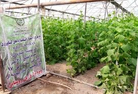 ایجاد 4 سایت تولید و مصرف محصول استاندارد و سالم در استان تهران