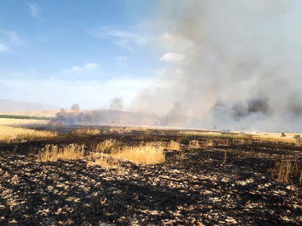 مهار آتشسوزی در مزارع گندم کازرون