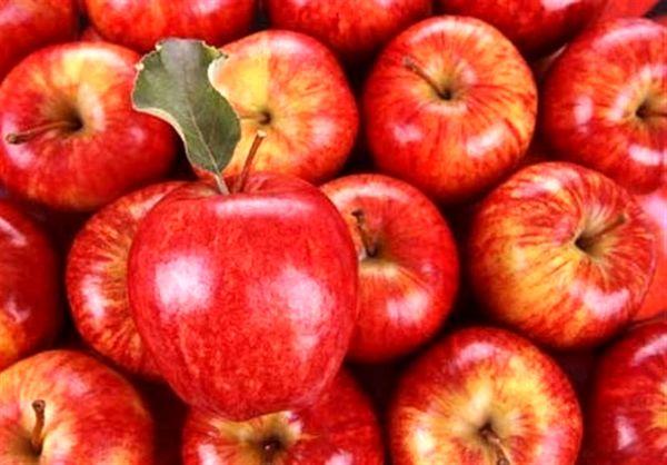 ارزآوری 741 میلیون دلاری صادرات میوه
