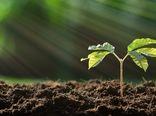استفاده از میکروبهای مهندسی شده در کشاورزی