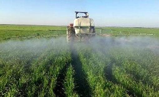 مبارزه با علفهای هرز در 2هزار هکتار از اراضی گندم ، جو وکلزا شهرستان مرند