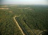 ۵۵ پروژه با سرمایهگذاری ۲۲۰ میلیارد تومان در حوزه کشاورزی استان بوشهر افتتاح میشود