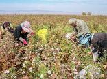آمایش سرزمین راهگشای بخش کشاورزی