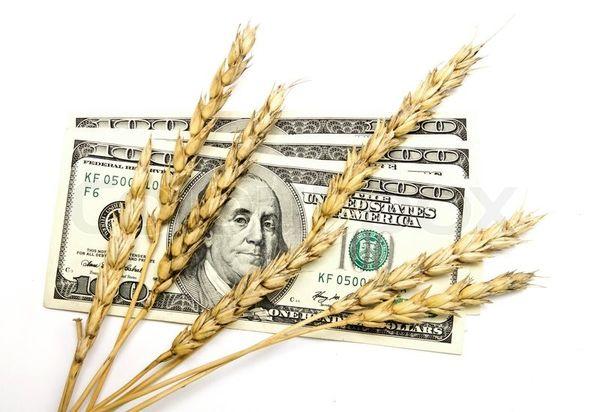 افزایش قیمت جهانی گندم در سال آینده به دلیل کاهش تولید