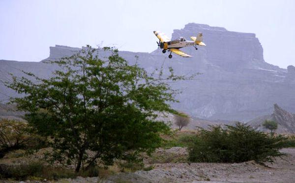 مبارزه با ملخ صحرایی در سطح 293 هزار از اراضی هفت استان جنوبی کشور
