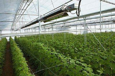 افزایش تولید در واحد سطح و اشتغالزایی از اهداف اصلی شرکت شهرکهای کشاورزی است