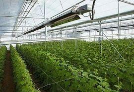 توسعه ۳۰۵۲ هکتاری گلخانه ها در سال ۱۴۰۰