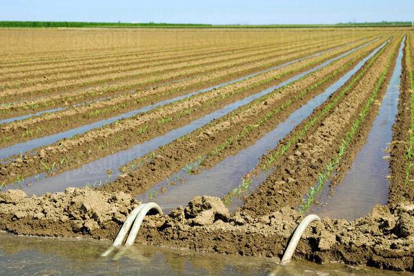 مشکلی در تامین آب کشت پائیزه  نداریم