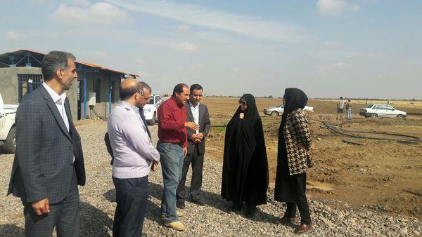 ۵۰ هکتار گلخانه در استان قزوین در دست احداث است