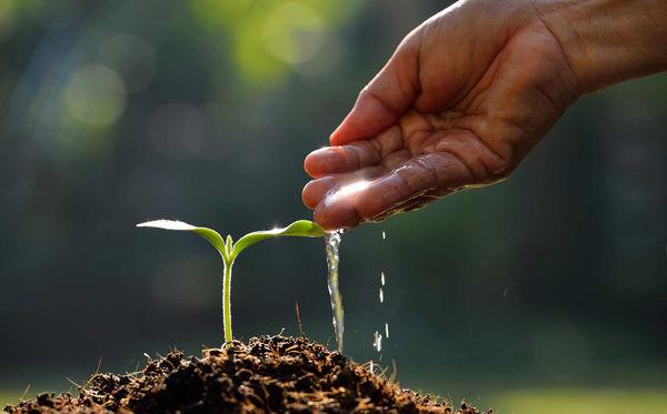 فرسایش ژنتیکی یا حق مالکیت معنوی بذر؟