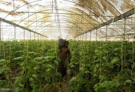صدور مجوز احداث 4 گلخانه در شهرکرد