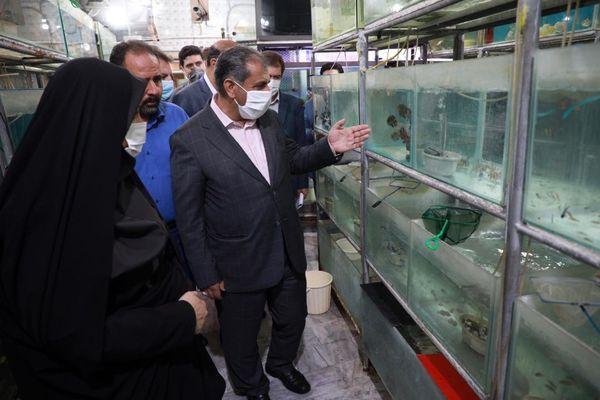 سالانه بالغ بر ۴۰۰۰ تن انواع ماهی در استان قزوین تولید می شود