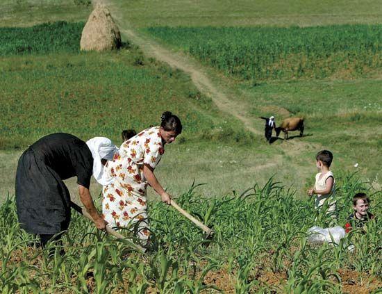 آینده کشاورزی آلبانی در دست زنان
