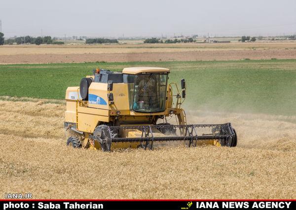 کاهش 1.8 درصدی ضایعات کمباین در مزارع گندم استان زنجان