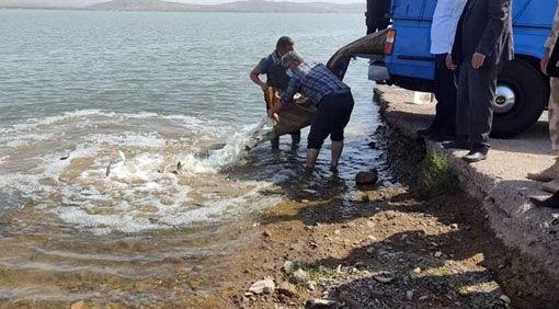 رها سازی ۴۵۰ هزار قطعه بچه ماهی گرمابی در مخزن سد خداآفرین