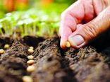 ضرورت حمایت از تولید و تکثیر بذور هیبرید سبزی و صیفی در کشور