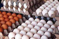 توزیع تخم مرغ با قیمت مصوب دولتی به زودی در استان اصفهان