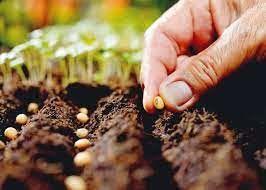 تولید  40 میلیون عدد بذر هیبرید  سبزی و صیفی گلخانهای در سال جاری