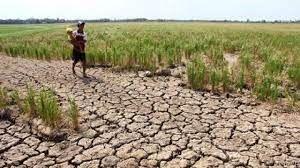 خسارت  ۸۳۰ میلیارد ریالی خشکسالی به کشاورزی شهرستان رازوجرگلان