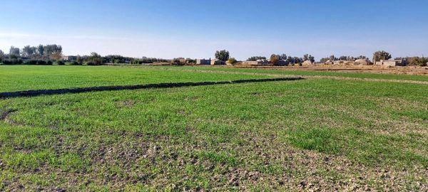 140هزار هکتار از ارضی کشاورزی سیستان و بلوچستان زیرکشت پاییزه میرود