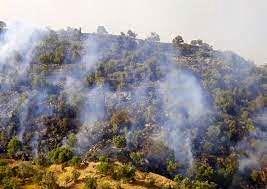 ۹۸ درصد علت آتشسوزی جنگلهای آذربایجانغربی عامل انسانی است