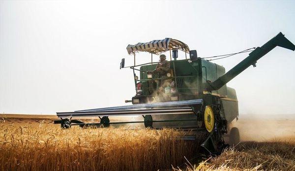 پیشبینی برداشت بیش از 20 هزار تن گندم از مزارع شهرکرد