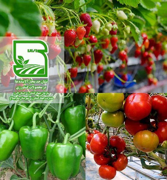 پیشتازی کشاورزان ساوجبلاغ در تولید محصول سالم