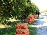 برداشت بیش از 9000 تن مرکبات در بخش شهداد شهرستان کرمان