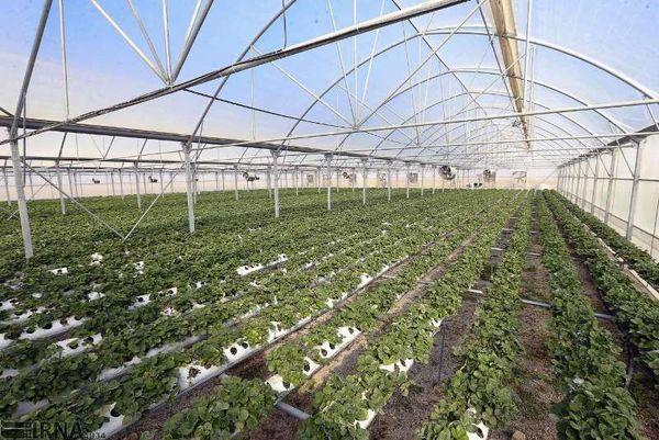 پیشرفت ۵۰ درصدی نهضت گلخانهای