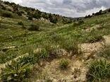 رفع تداخل ۴۰ هزار هکتار از مزارع شهرستان جاجرم