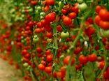 توسعه کشت محصولات باغی در استان کرمان