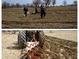 کشت بهاره نخود در بخش گواور شهرستان گیلانغرب آغاز  شد