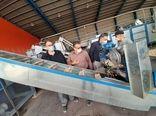 تولید سالانه بیش از ۸ هزار تن پسته در کویریترین نقطه استان تهران