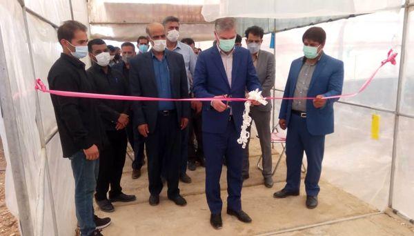 گلخانه پرورش میوه های گرمسیری (فیسالیس،پاپایا) در شهرستان دماوند افتتاح شد