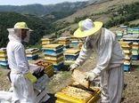 تولید سالانه ۱۸۵۷ تن عسل