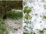 سرمازدگی و تگرگ بیش از ۲۴۰۰میلیارد ریال به بخش کشاورزی ارومیه خسارت وارد کرد